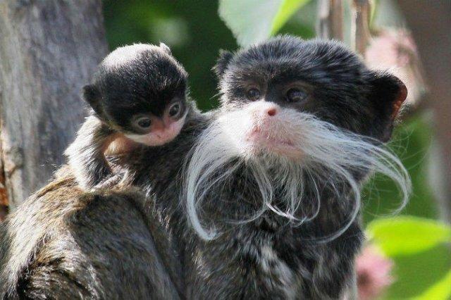 Cele mai simpatice animale, in 15 poze adorabile - Poza 6