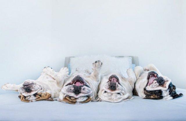 Pictorialul sucit cu cei mai simpatici caini - Poza 3