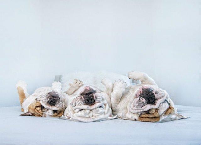 Pictorialul sucit cu cei mai simpatici caini - Poza 12