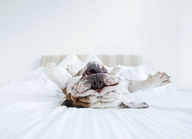 Pictorialul sucit cu cei mai simpatici caini - Poza 14