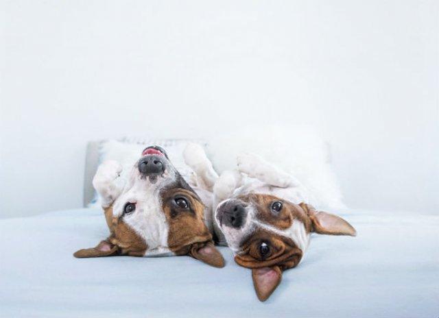 Pictorialul sucit cu cei mai simpatici caini - Poza 6