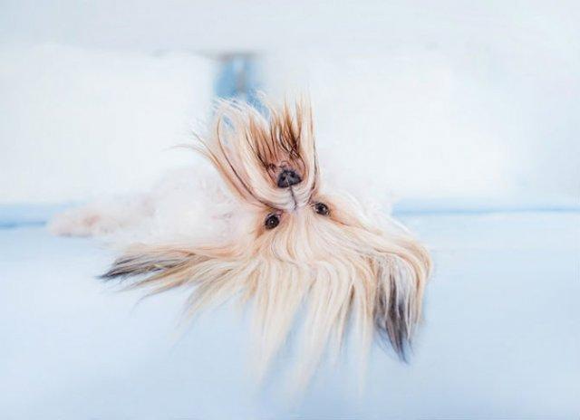 Pictorialul sucit cu cei mai simpatici caini - Poza 7