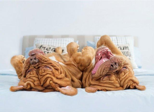 Pictorialul sucit cu cei mai simpatici caini - Poza 9
