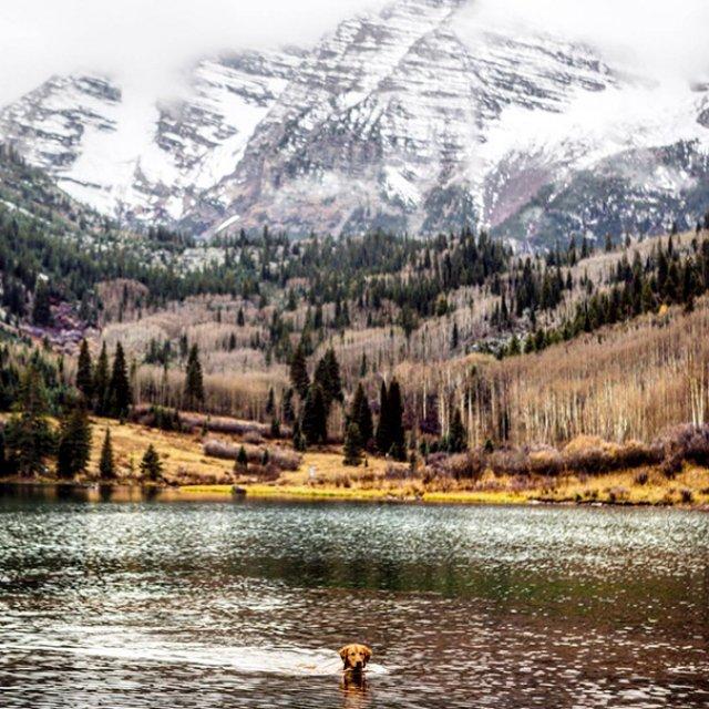 Aventurile epice ale lui Aspen, retrieverul hoinar - Poza 17