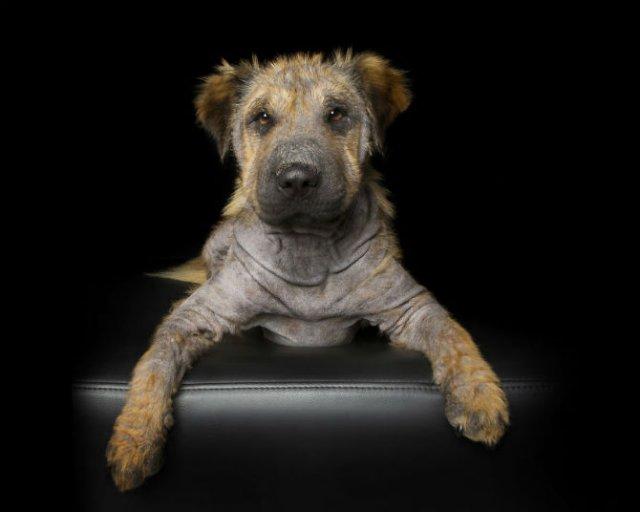 Imperfectiunile perfecte: Frumusetea animalelor cu dizabilitati