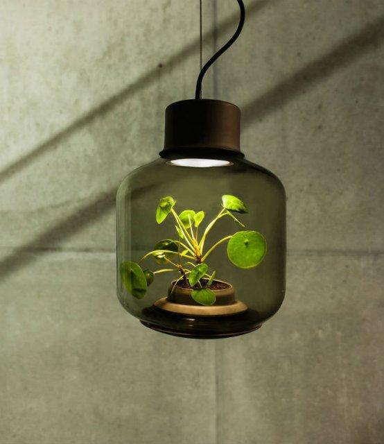 Lampa-ghiveci: Un ornament viu si luminos - Poza 2