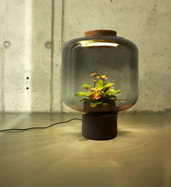 Lampa-ghiveci: Un ornament viu si luminos - Poza 3