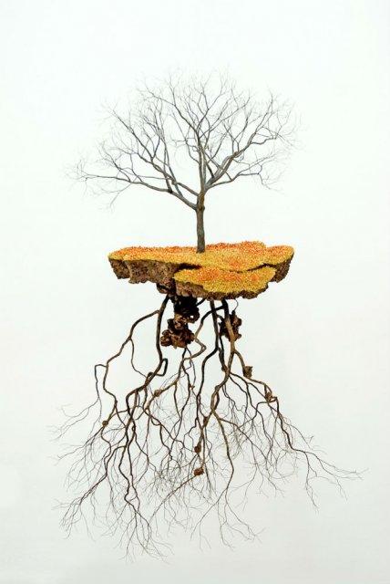Metafora vizuala a dezradacinarii - Poza 10