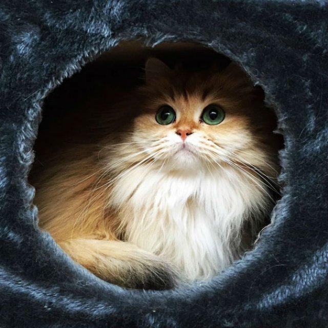 Smoothie, cea mai fotogenica pisica din lume - Poza 6