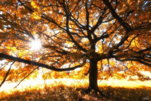 Un vis de toamna, printre copaci - Poza 9