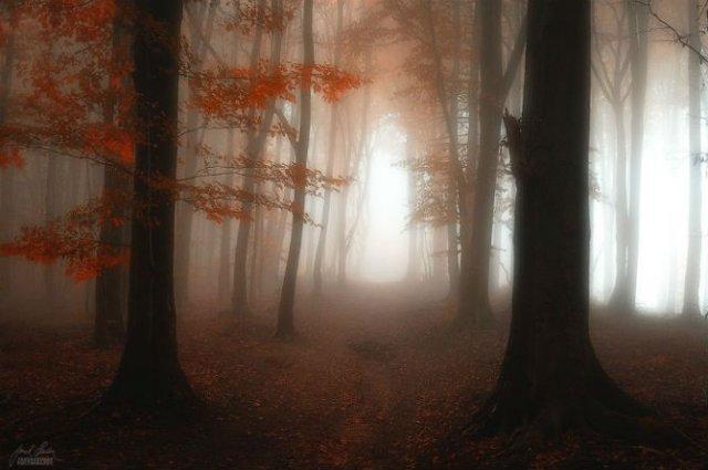 Un vis de toamna, printre copaci - Poza 10