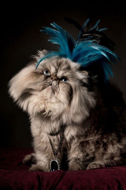 Nobletea animalelor: 9 Portrete ale sufletelor aristocrate - Poza 1