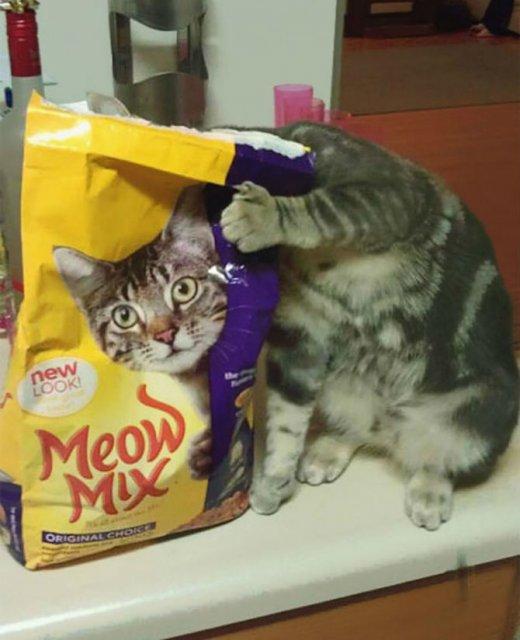 Altfel de poze cu pisici, in ipostaze haioase - Poza 8