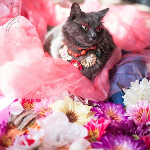 Cea mai cocheta pisica, in poze de colectie - Poza 12