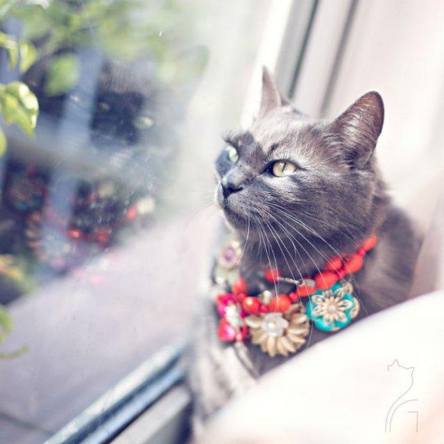 Cea mai cocheta pisica, in poze de colectie - Poza 13