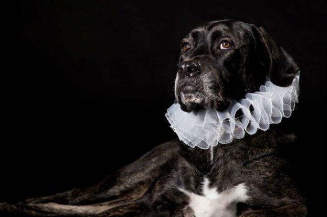 Nobletea animalelor: 9 Portrete ale sufletelor aristocrate - Poza 2