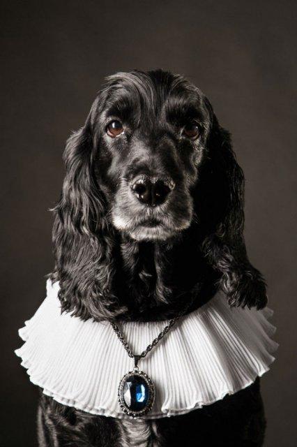 Nobletea animalelor: 9 Portrete ale sufletelor aristocrate - Poza 3