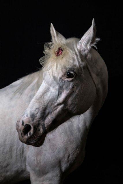 Nobletea animalelor: 9 Portrete ale sufletelor aristocrate - Poza 4
