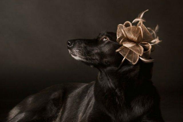 Nobletea animalelor: 9 Portrete ale sufletelor aristocrate - Poza 5