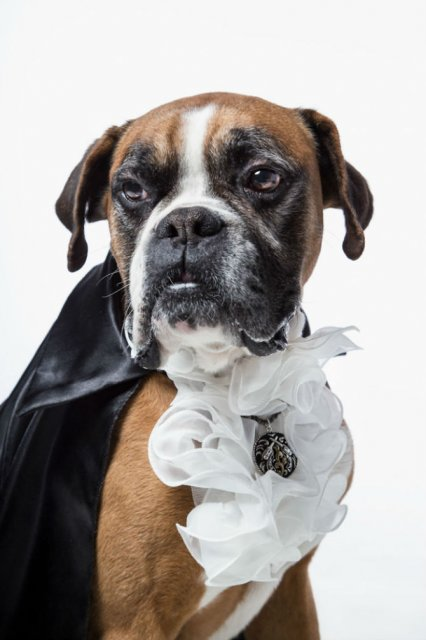 Nobletea animalelor: 9 Portrete ale sufletelor aristocrate - Poza 6