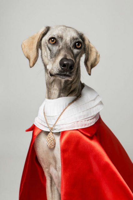 Nobletea animalelor: 9 Portrete ale sufletelor aristocrate - Poza 7