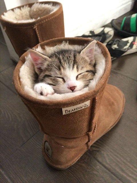 17 Pisici care dorm in cele mai haioase pozitii - Poza 11