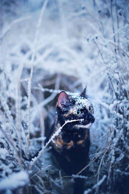 Plimabrea pisicii multicolore prin patru anotimpuri - Poza 16