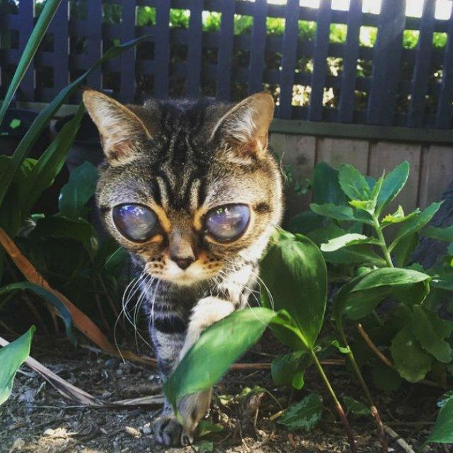 Felina cu ochi de extraterestru - Poza 1
