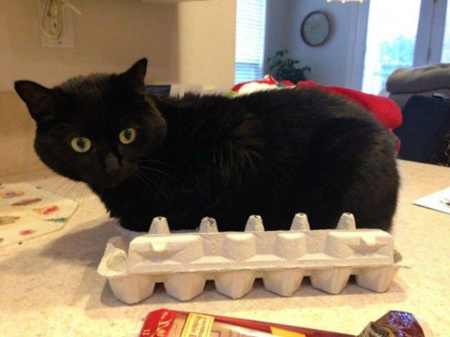 8 poze cu pisici inghesuite prin cele mai ciudate locuri - Poza 8
