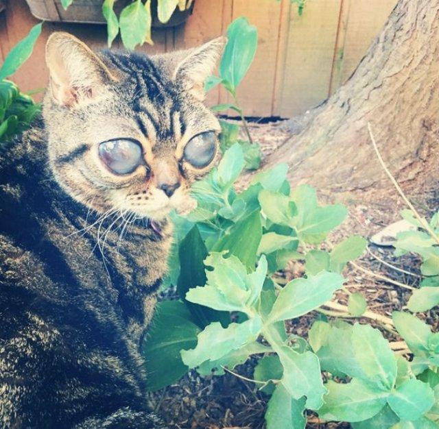 Felina cu ochi de extraterestru - Poza 3