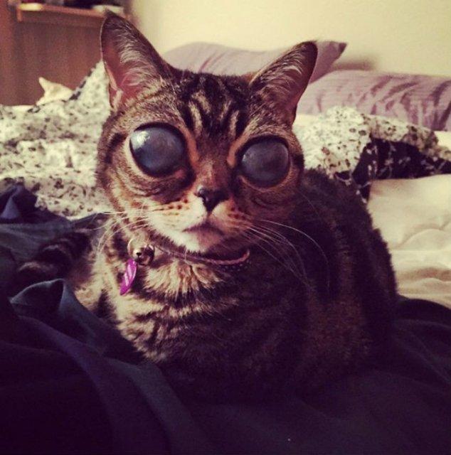 Felina cu ochi de extraterestru - Poza 4