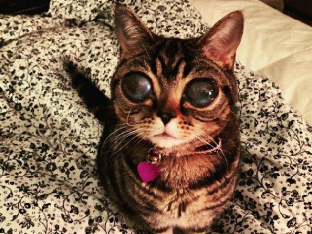 Felina cu ochi de extraterestru - Poza 5