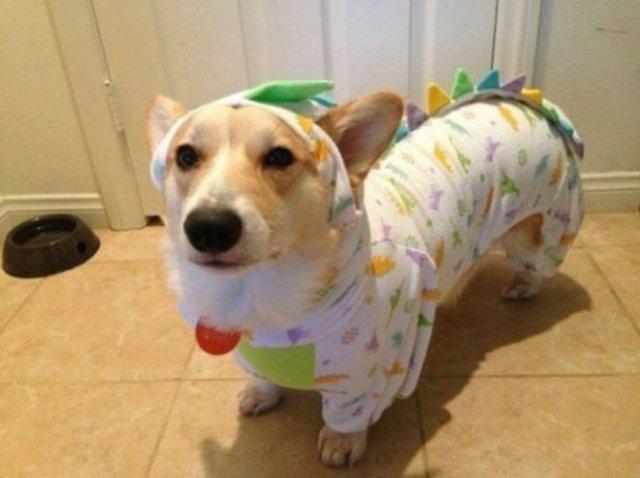 Caini simpatici in pijamale - Poza 9