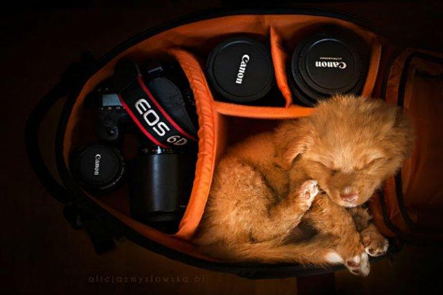 Cele mai frumosi caini, in poze de exceptie - Poza 13
