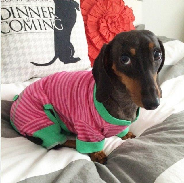 Caini simpatici in pijamale - Poza 7