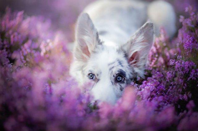 Cele mai frumosi caini, in poze de exceptie - Poza 12