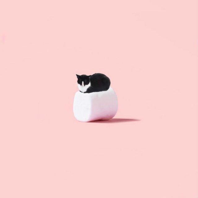 Cheeto, o pisica haioasa, intr-un pictorial trasnit - Poza 14