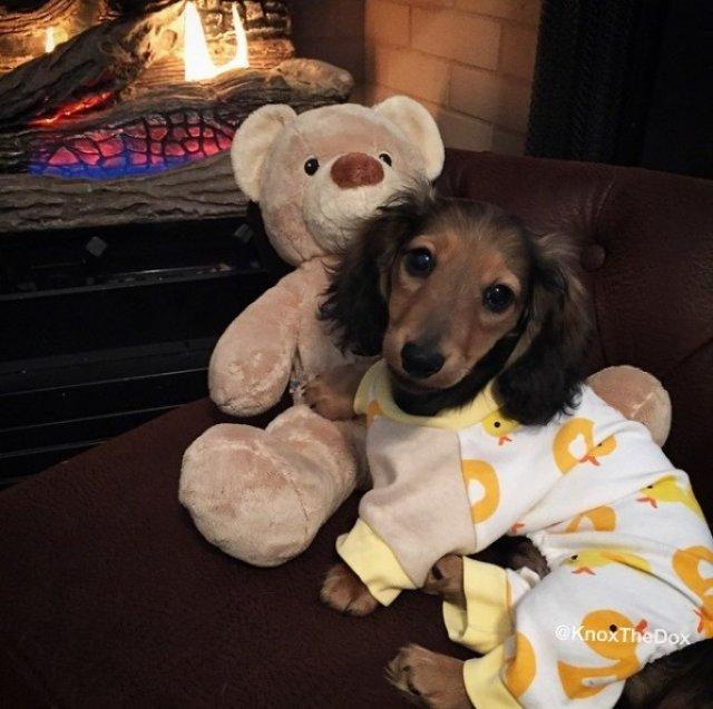Caini simpatici in pijamale - Poza 3