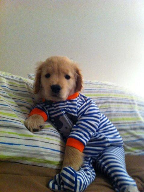Caini simpatici in pijamale - Poza 1