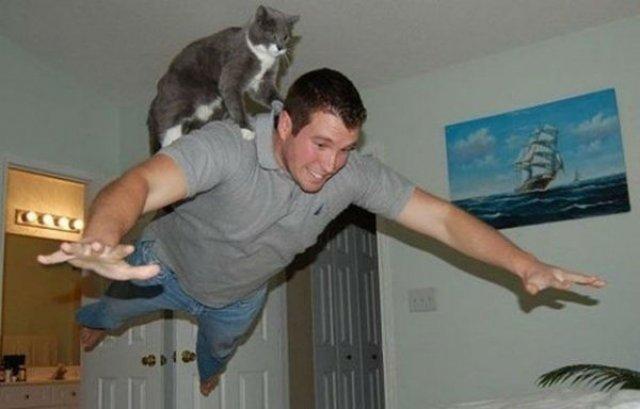 20+ Poze amuzante cu pisici naravase - Poza 18