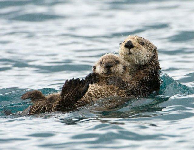 Lumea animalelor, in poze de familie - Poza 19