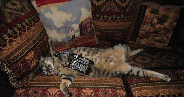 Poze haioase cu pisici neastamparate - Poza 4