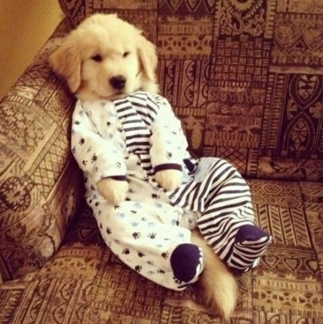Caini simpatici in pijamale - Poza 6