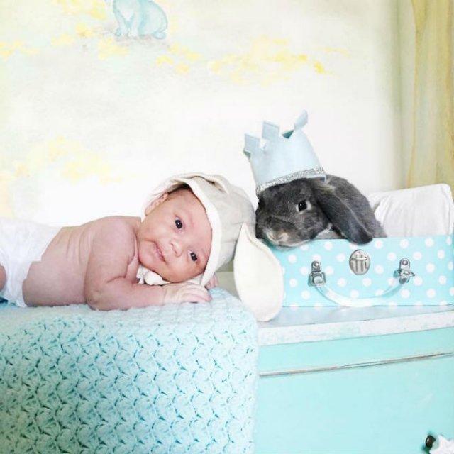 Un baietel si patru iepurasi, in fotografii adorabile - Poza 10