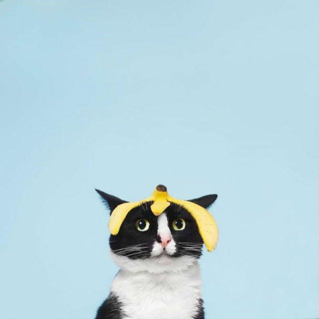 Cheeto, o pisica haioasa, intr-un pictorial trasnit - Poza 13