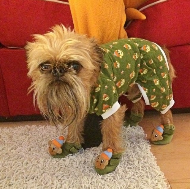 Caini simpatici in pijamale - Poza 5