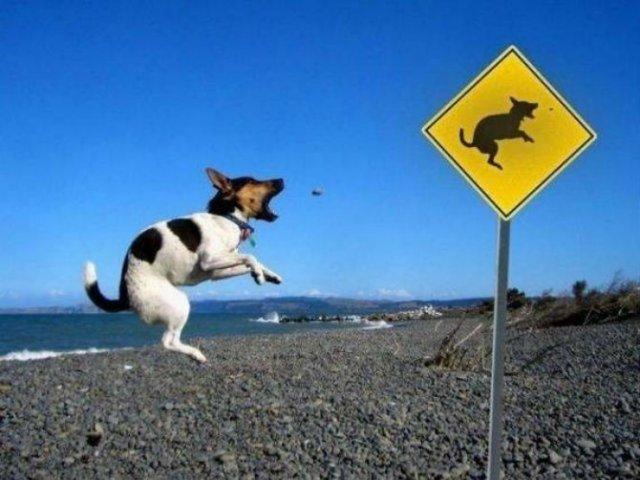 Momente haioase de pe litoral, in imagini savuroase - Poza 17