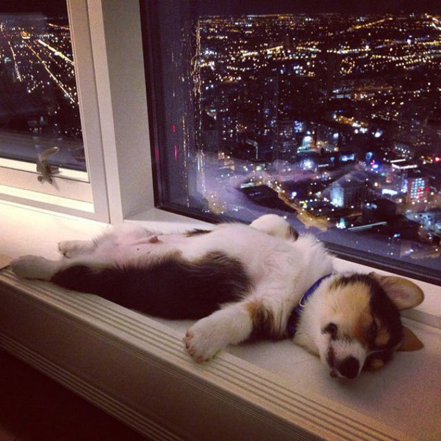 Cele mai haioase pozitii in care dorm animalele - Poza 9