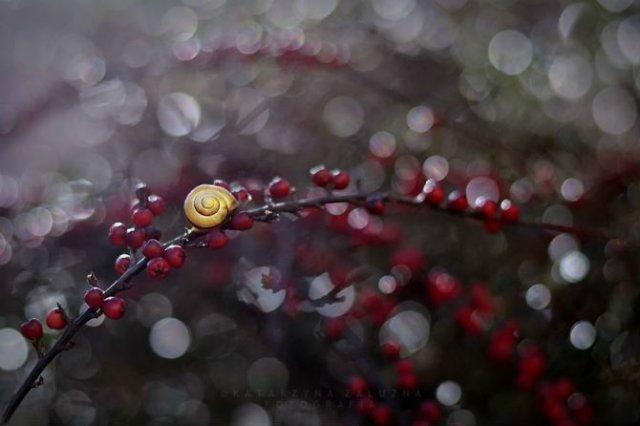 Lumea magica a melcilor, in poze superbe - Poza 14