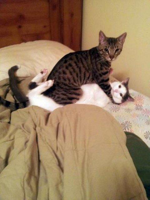 20+ Poze amuzante cu pisici naravase - Poza 17